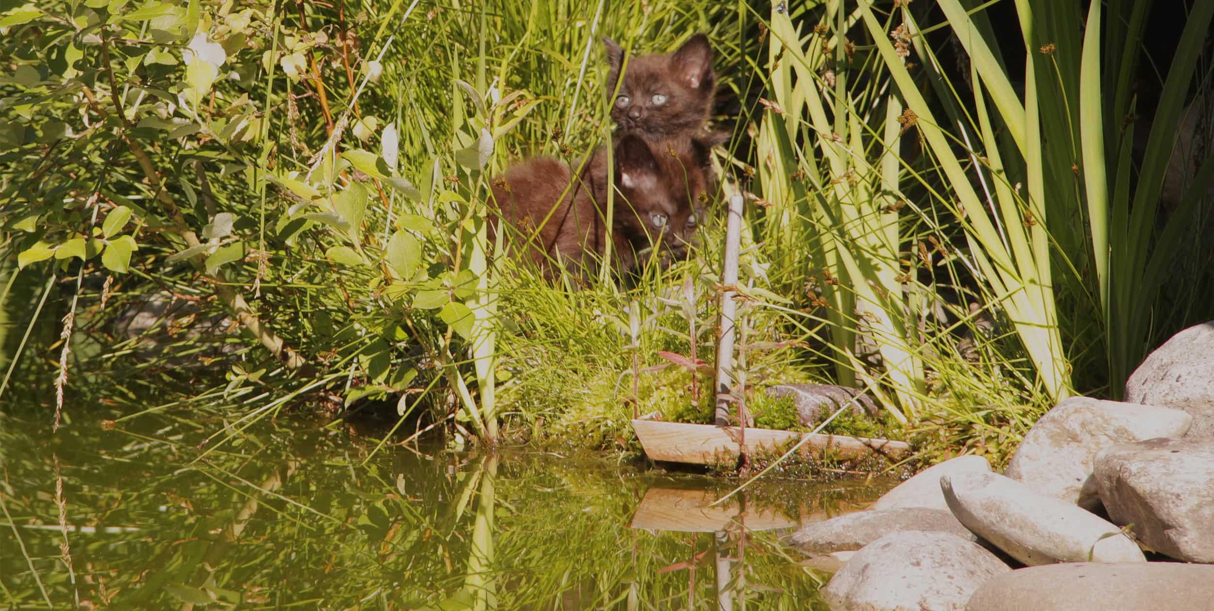 Katzenbabys am Teich