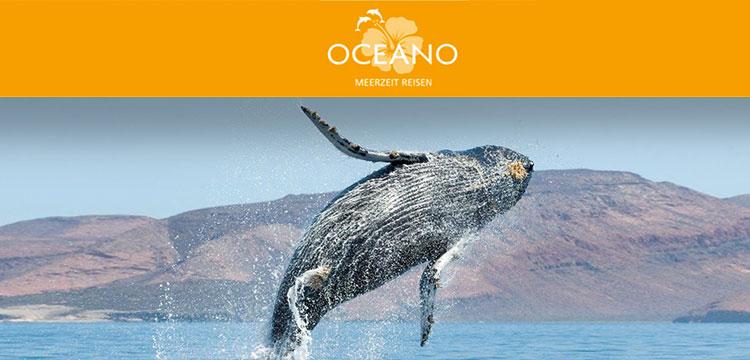 Referenzbild Meerzeit Reisen mit Wal